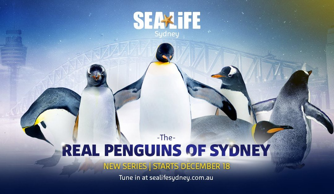 Real Penguins Of Sydney